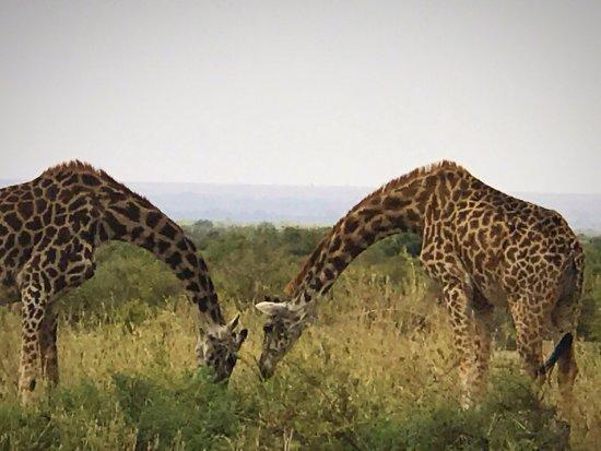 Amboseli National Park, Κένυα: photo3.jpg