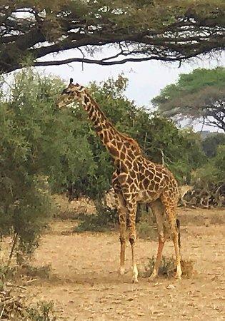Amboseli National Park, Κένυα: photo4.jpg