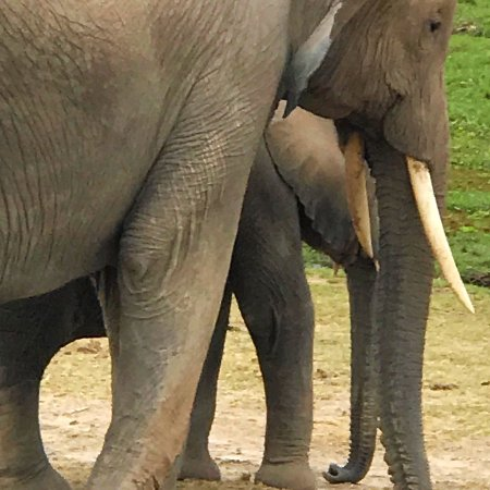 Amboseli National Park: photo9.jpg
