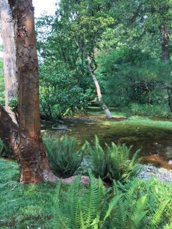 Seattle Japanese Garden: photo6.jpg