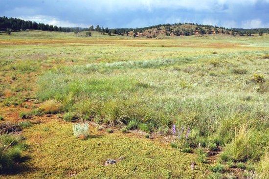 Florissant, CO: Beautiful Landscape Around Hiking Trail