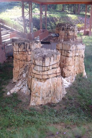 Florissant, CO: Redwood Stump Group Under Roof