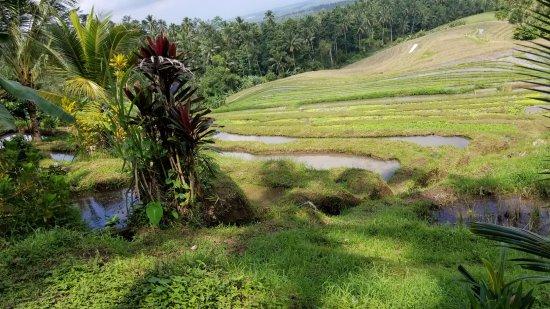 Bali Eco Stay Bungalows: walking tour