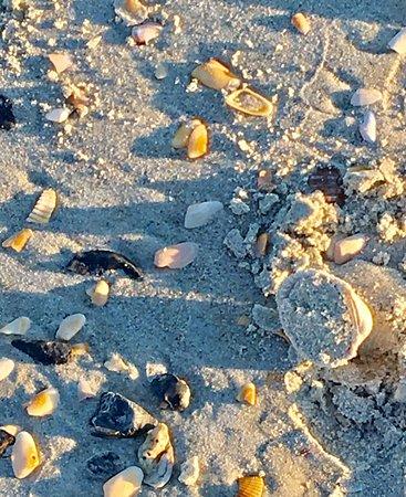 Myrtle Beach Travel Park: photo2.jpg