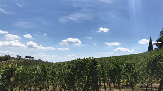 Casalvento Winery: A snapshot of the vineyards