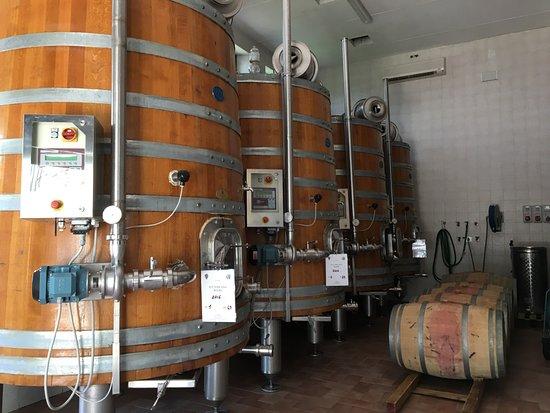 Casalvento Winery: Inside the facilities