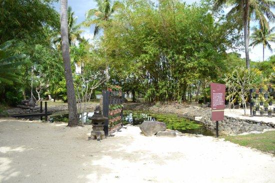 Sonaisali Island, فيجي: Lotus pond