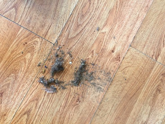 Warrens, WI: Dirt swept up from the living room floor