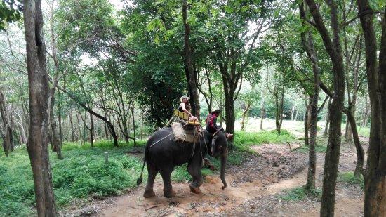 Kok Chang Safari Elephant Trekking: IMG_20170830_124653_large.jpg