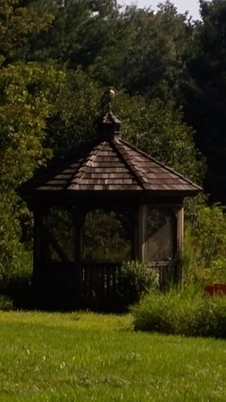 Kintnersville, Пенсильвания: Gazebo with bird of prey