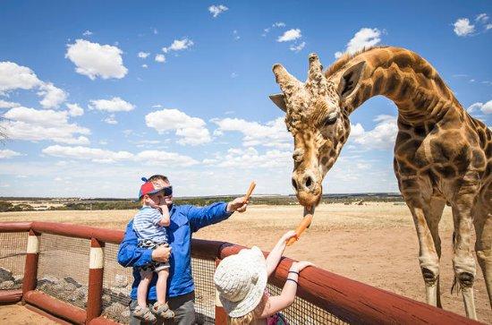 Giraffe Safari y un día en el Zoo de...