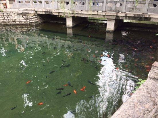 Jinan, Kina: 很多魚優游其中,水清澈見底
