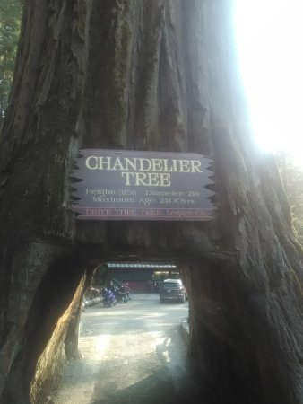 Road through the tree picture of chandelier drive through tree chandelier drive through tree photo mozeypictures Image collections