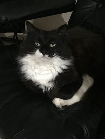 Batemans Bay Manor - Bed and Breakfast: One of their lovely cats