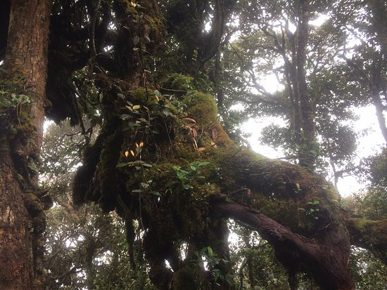 Mossy Forest: Moss on the trees