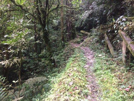 Cameron Highlands!!! | Travel Blog