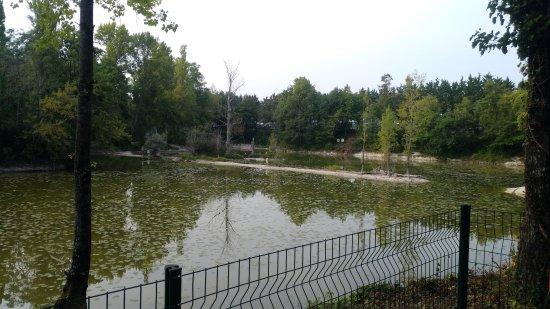Trogues, France: A fuir... 4 étoiles pour la piscine, mais pour le reste....0