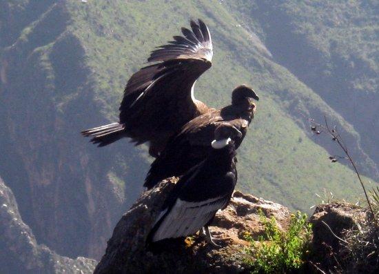 A Colca Tours Peru
