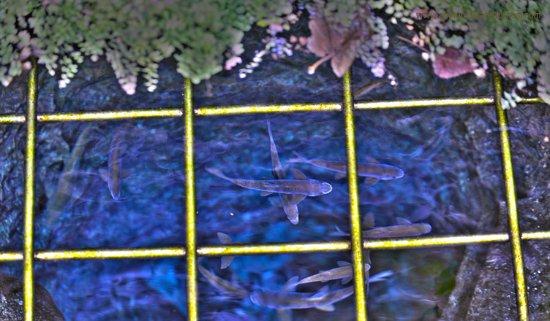 Tohma Canyon: camının onundekı havuzdan goruntu