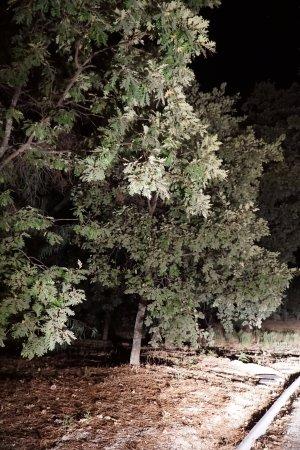 Castelo Novo, Portugal: Cheguei de noite...