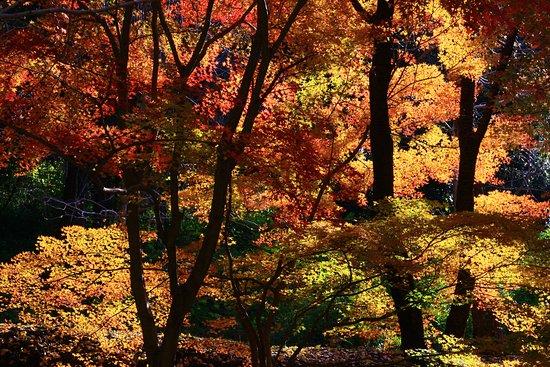 Takasaki Town General Park