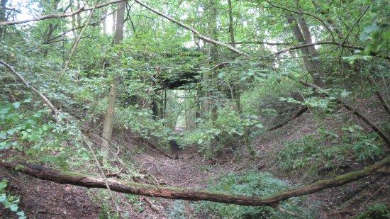 Desborough, UK: woodland