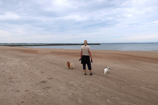 Ängelholm, สวีเดน: Hundarna har sin egen bit av stranden, norr om pirarmarna i Skälderviken och i Sibiren.