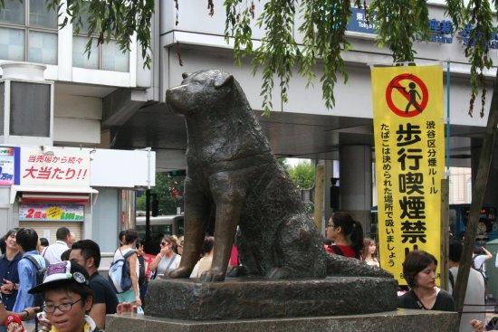 Shibuya, Japón: Ecco la statua