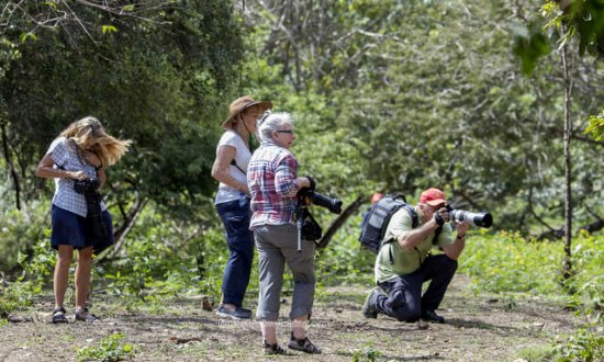 Flores Bird Watching Tour