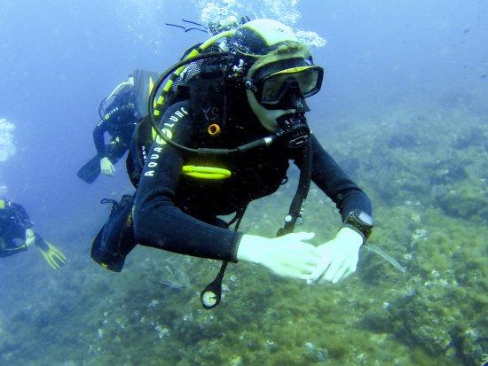 Calypso diving estartit s&l fashions dress collection