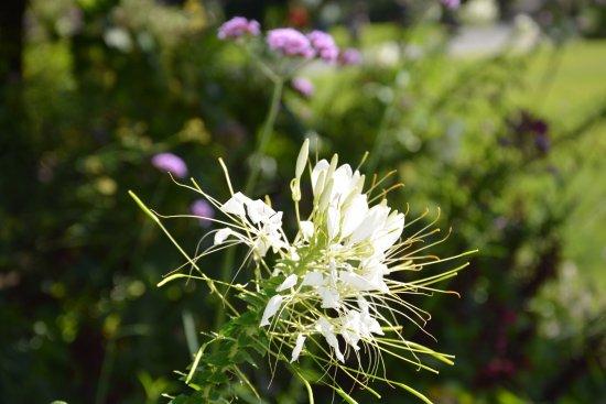Une jolie fleur parmi toutes les jolies fleurs du jardin - Photo de ...