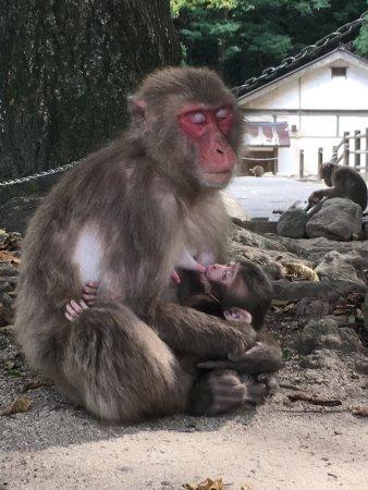 Takasakiyama Natural Zoo (Oita, Japan): What You Need to Know (with Photos) -...