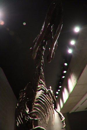 Earth Sciences Museum: It's huge!