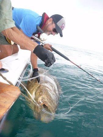 Fort Pierce, FL: This grouper was HUGE!!
