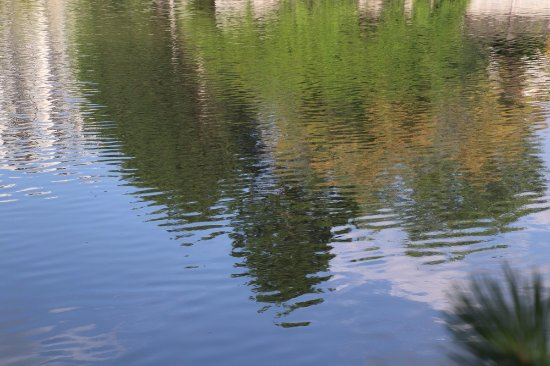 Kitchener, Canada: Reflections on water