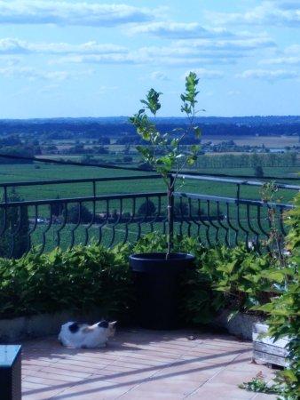 Pujols, France: terrasse