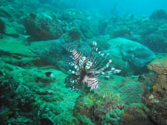 Taganga, Colombia: Lion fish - www.divecol.com
