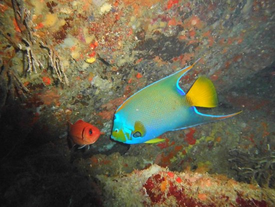 Taganga, Colombia: Plongée Parc Tayrona - buceo Parque Tayrona - Diving Tayrona Park - www.divecol.com