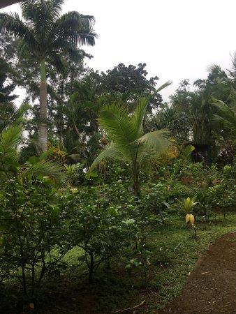 Monkey Lodge Panama: photo5.jpg