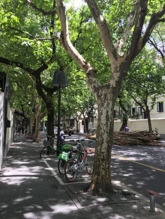 Former French Concession: One of the many tree lined streets.