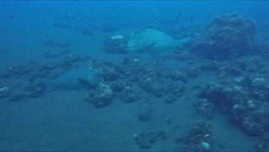 Kubu, Indonesia: Dive site :)