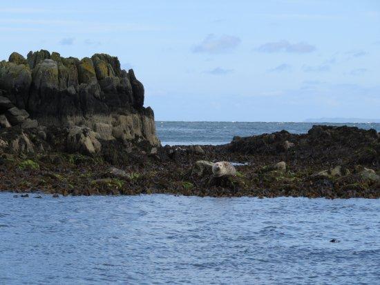 Bridgend, İrlanda: Foca a Shrove beach