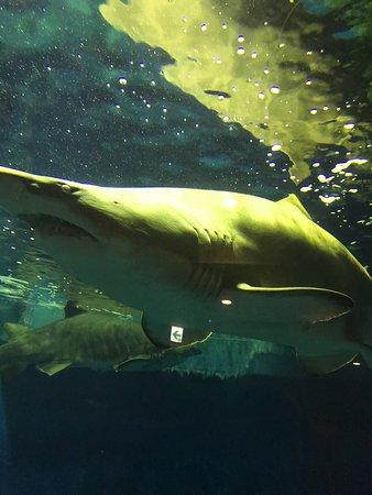 しながわ水族館, photo1.jpg