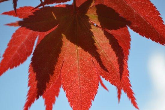 Haywards Heath, UK: Colours