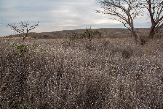 Province of La Pampa, Argentina: Lihué Calel