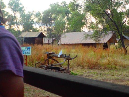 Bungle Bungle Wilderness Lodge: Vue du restaurant vers les tentes