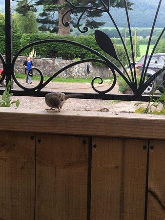 The Tea Garden at Comrie Croft Photo