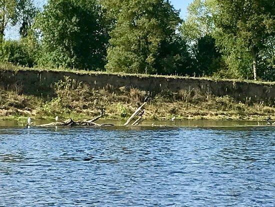 Club Saumurois de Canoe Kayak 사진