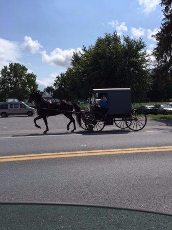 The Amish Experience: l'unico mezzo di locomozione del popolo Amish