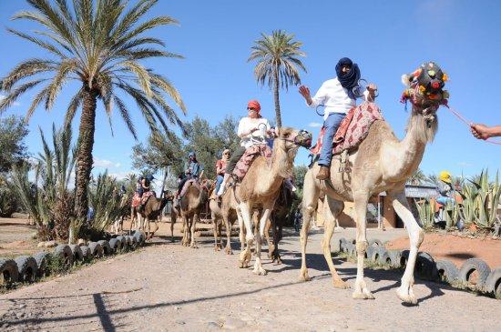 Marrakesh Quad Biking: Marrakech Camel Ride